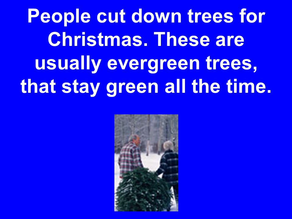 People cut down trees for Christmas