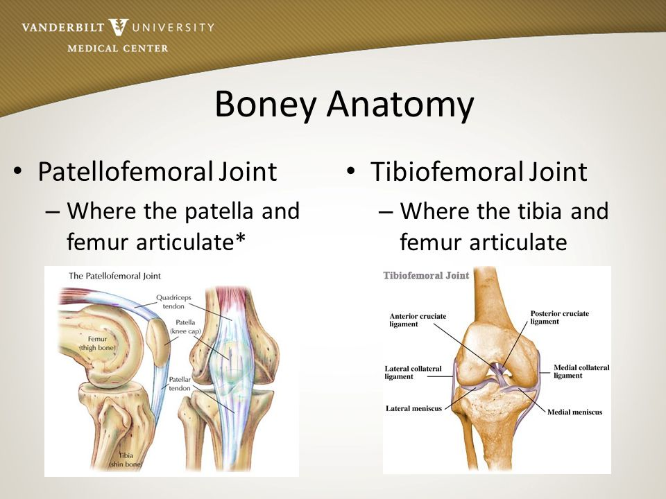 Recognition of Knee Injuries - ppt download