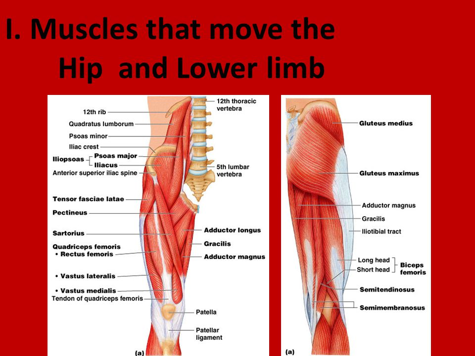 G Muscles Of The Arm Move The Forearm Elbow Ppt Video Online