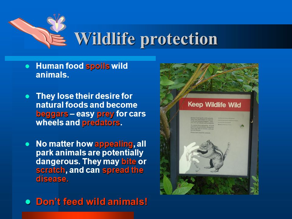 Wildlife protection Don't feed wild animals!