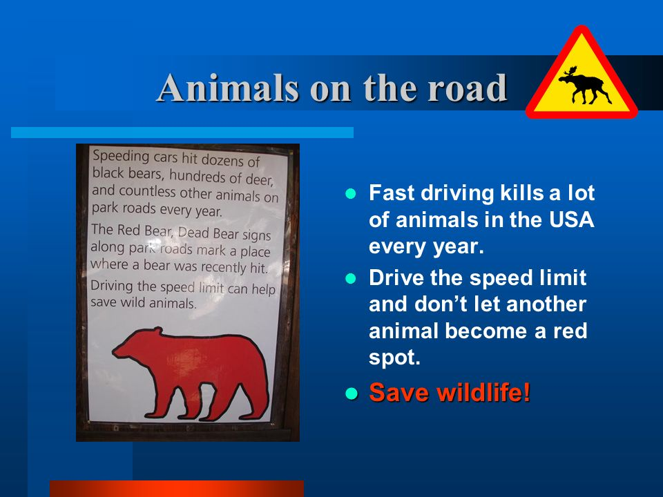 Animals on the road Save wildlife!