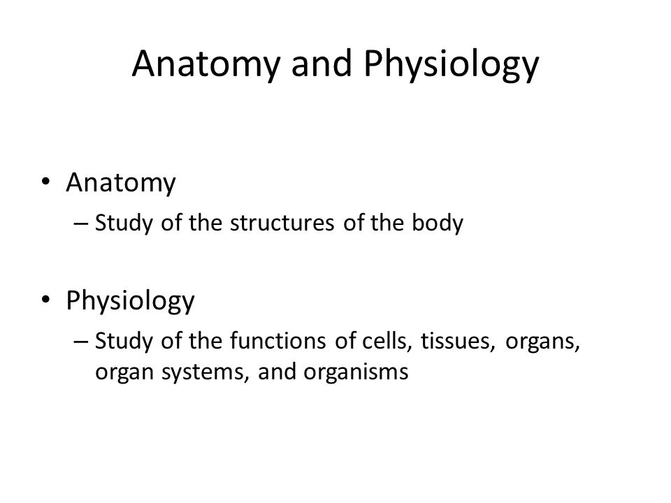 Introduction to Physiology and Homeostasis - ppt video online download