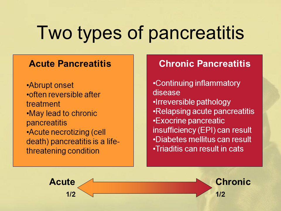 Pancreatitis In Dogs And Cats Ppt Download