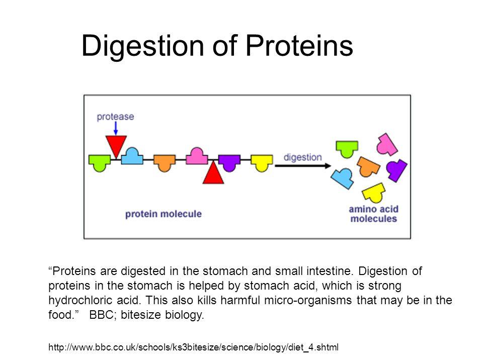 Digestive system diet ppt video online download 54 digestion ccuart Images