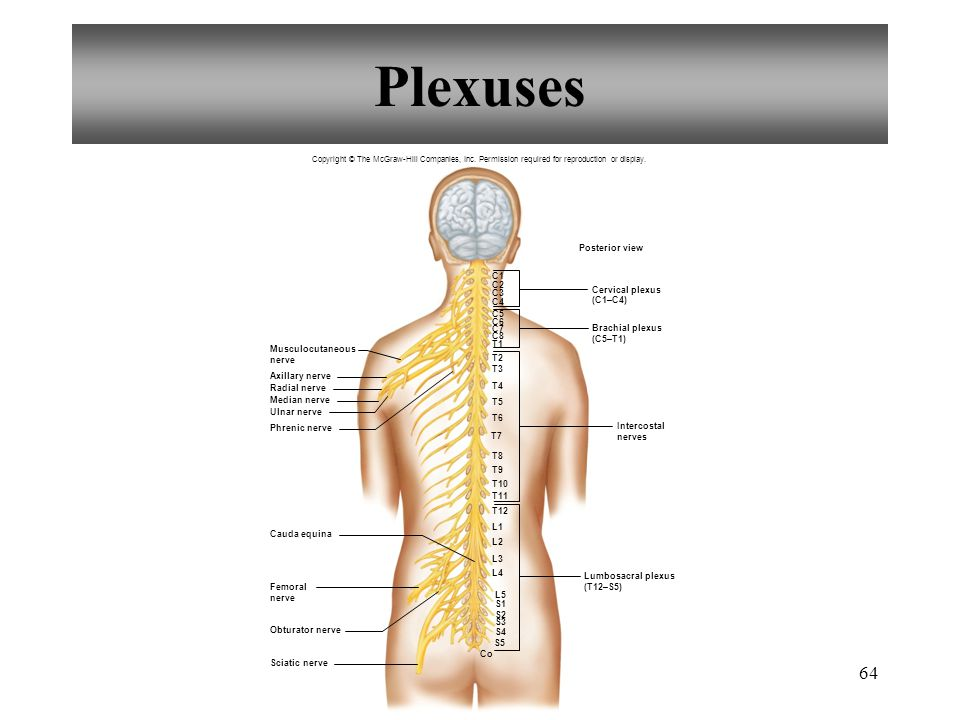 Chapter 11 Nervous System Ii Divisions Of The Nervous System Ppt