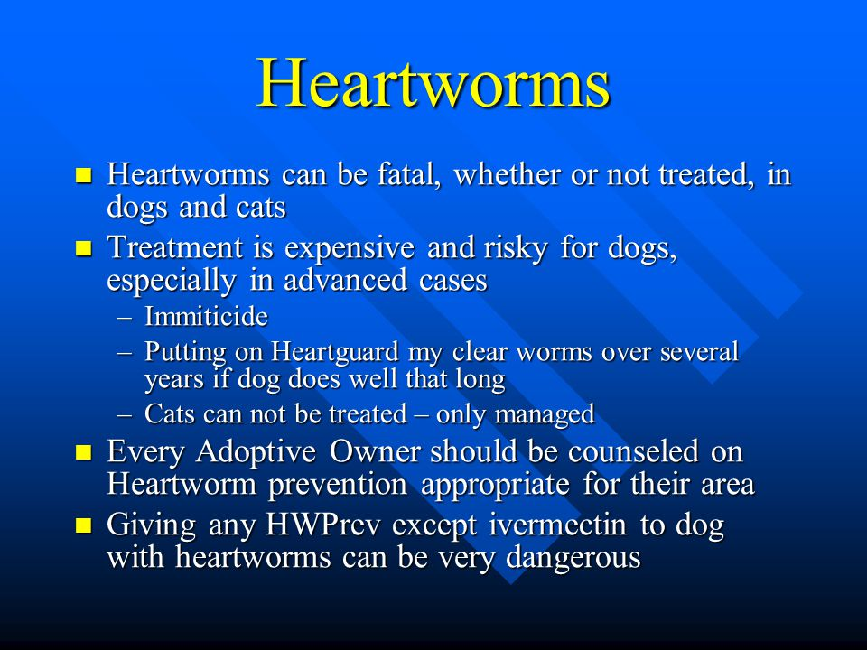 Can My Dog Live With Heartworms
