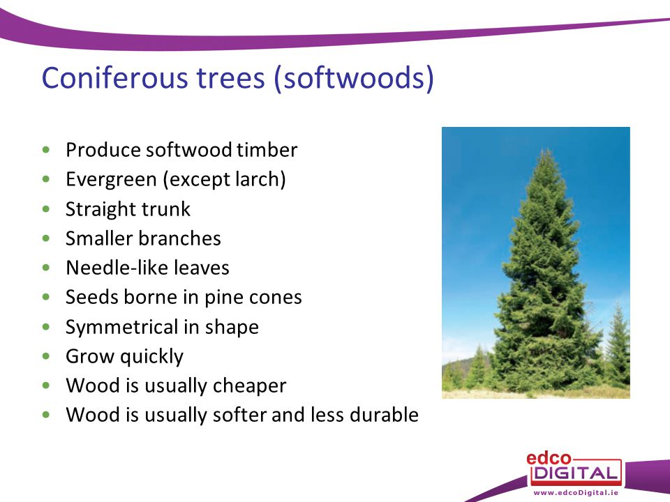 Chapter 8 Types Of Tree Ppt Video Online Download