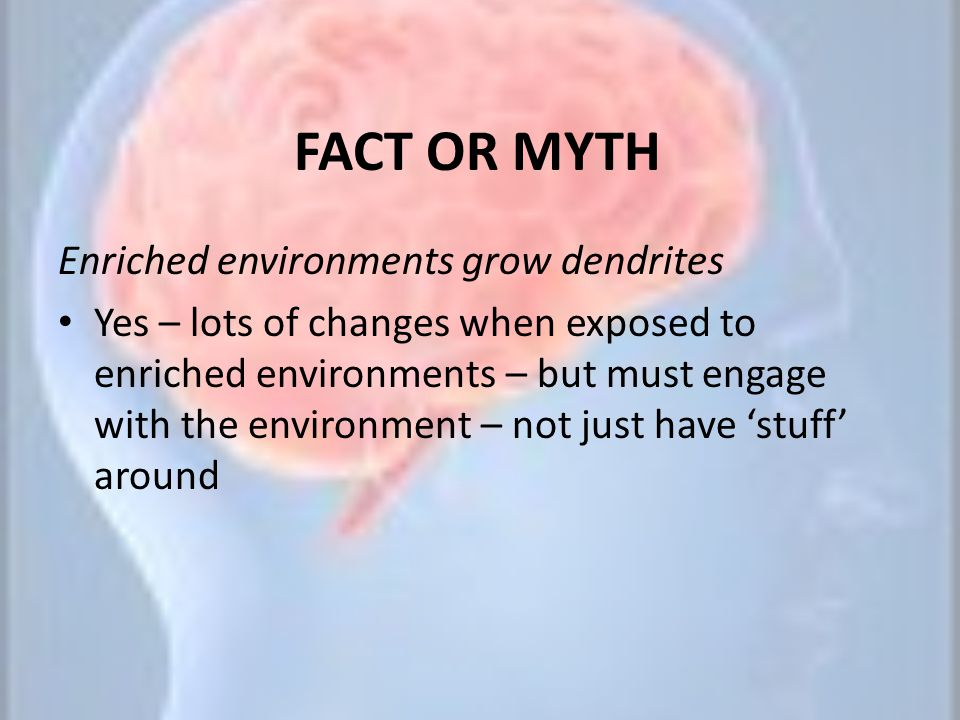 FACT OR MYTH Enriched environments grow dendrites