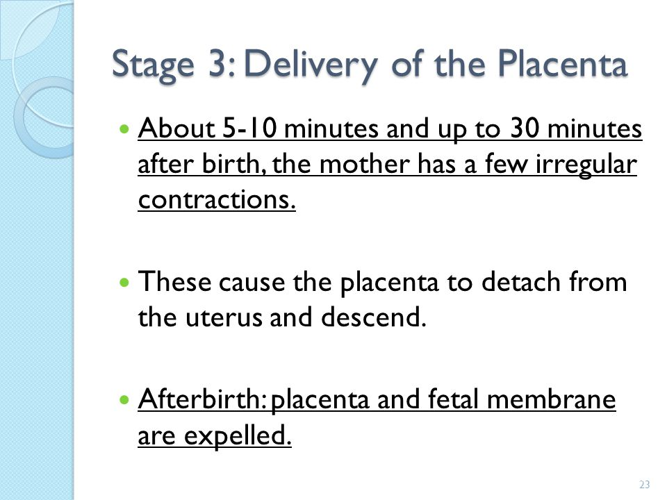 Stage 3: Delivery of the Placenta