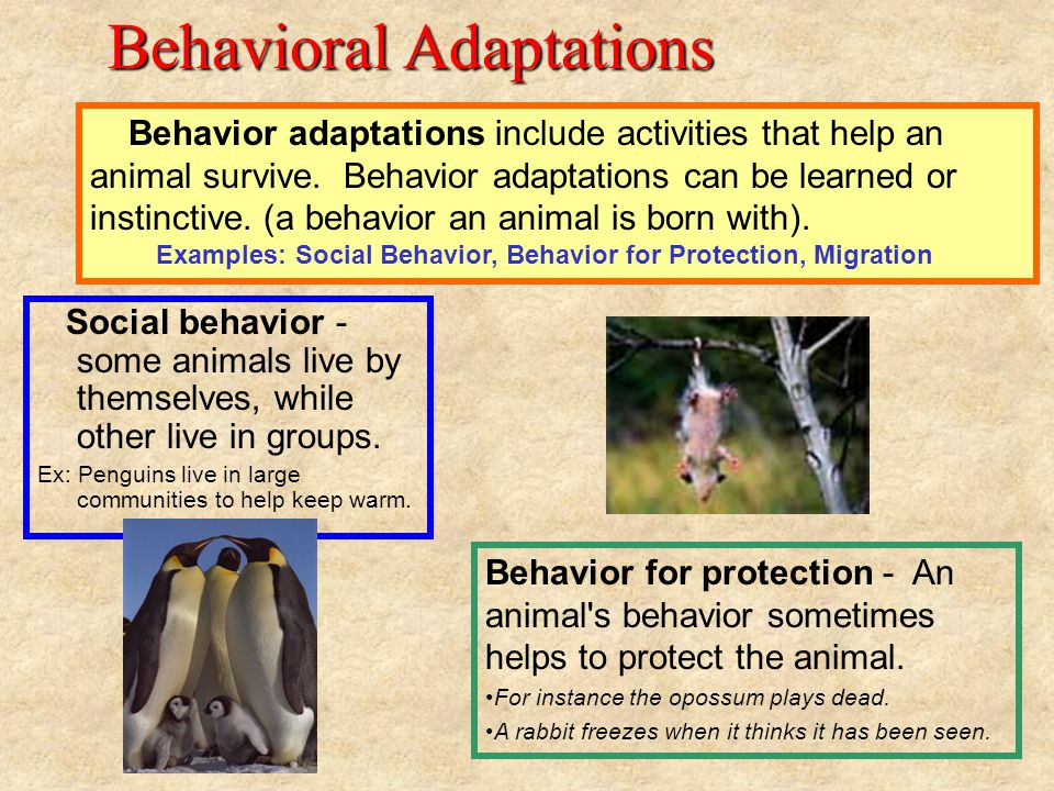 All About Animals Va Sol Ppt Download