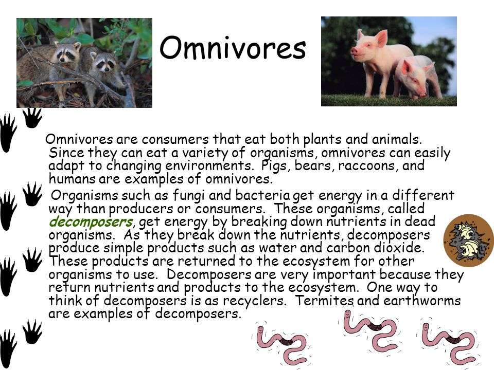 Producers Consumers And Decomposers Ppt Video Online Download