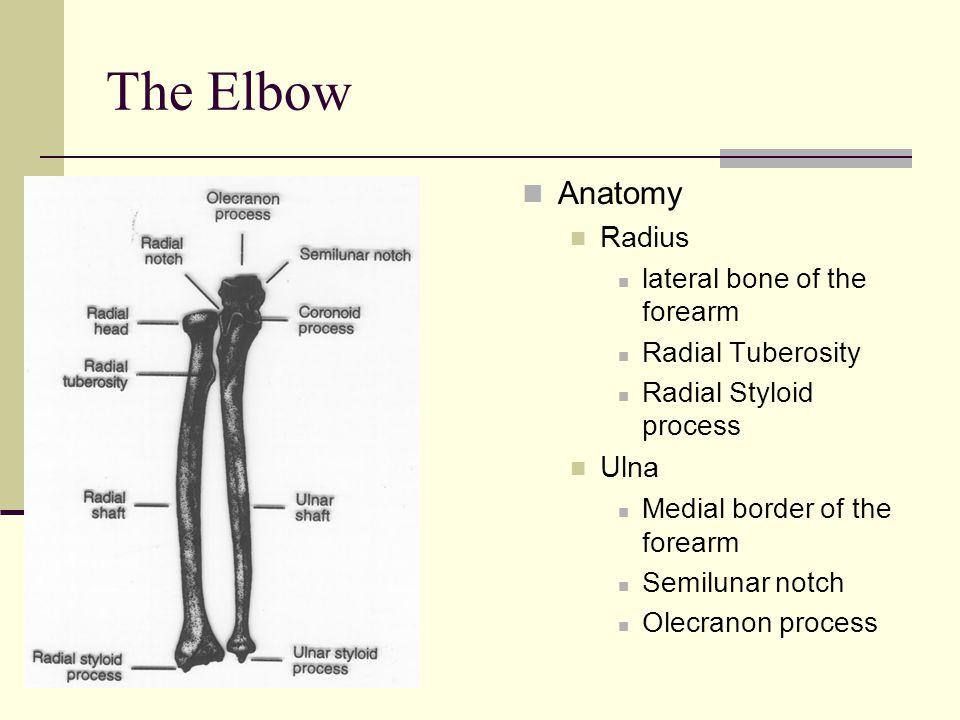Anatomy Radius Ulna Image collections - human body anatomy