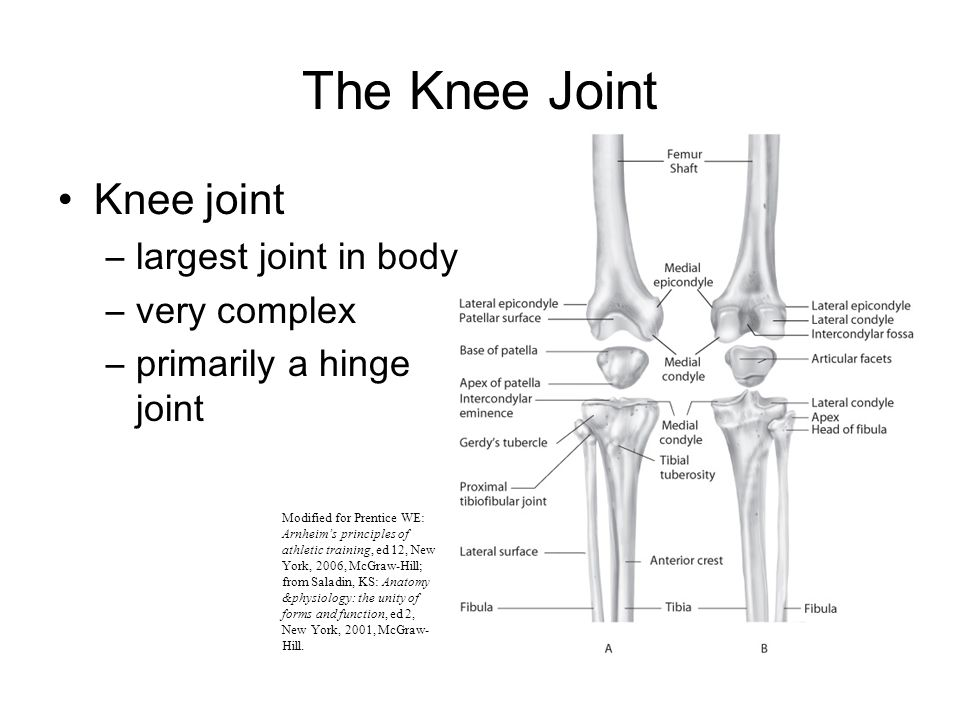Chapter 10 The Knee Joint. - ppt video online download