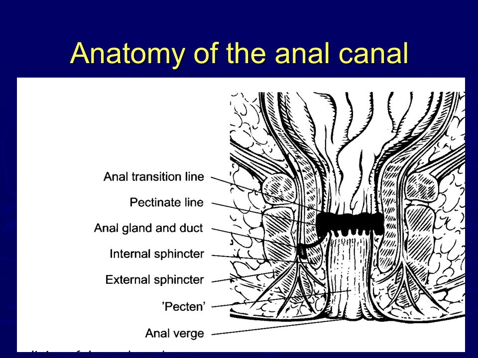 Anatomy of the anal canal