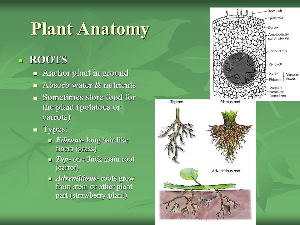 Grade 7 Biology Mr Anderson Ppt Video Online Download