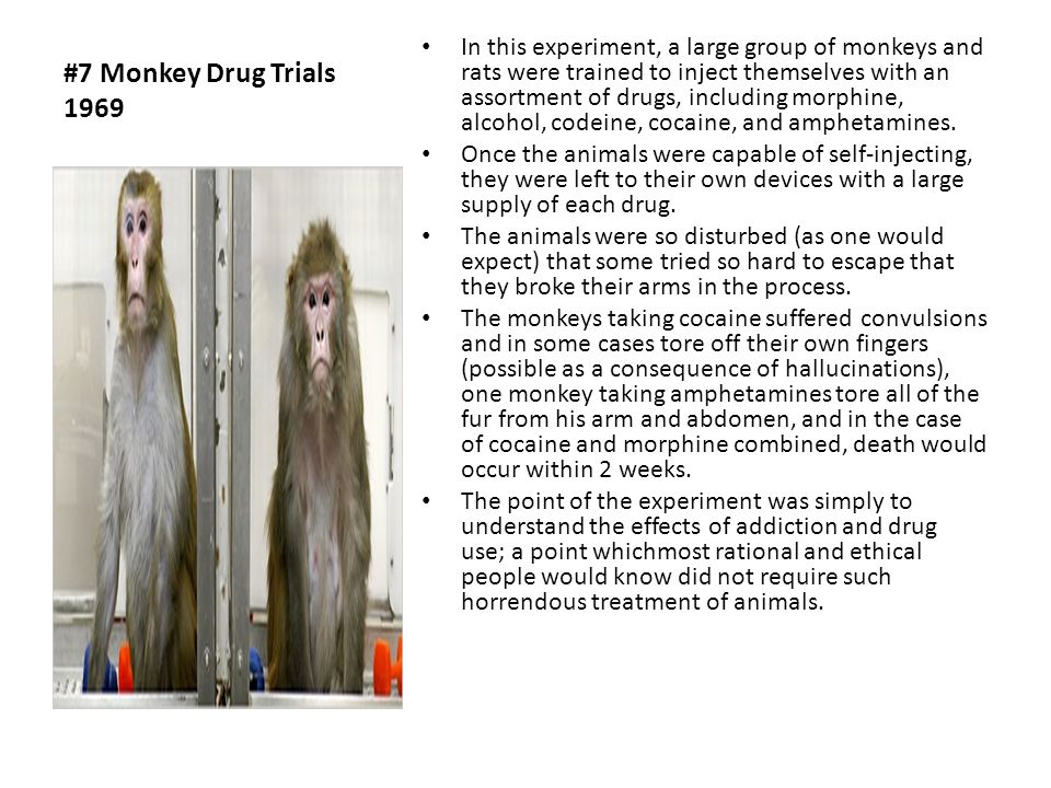 the monkey drug trials of 1969