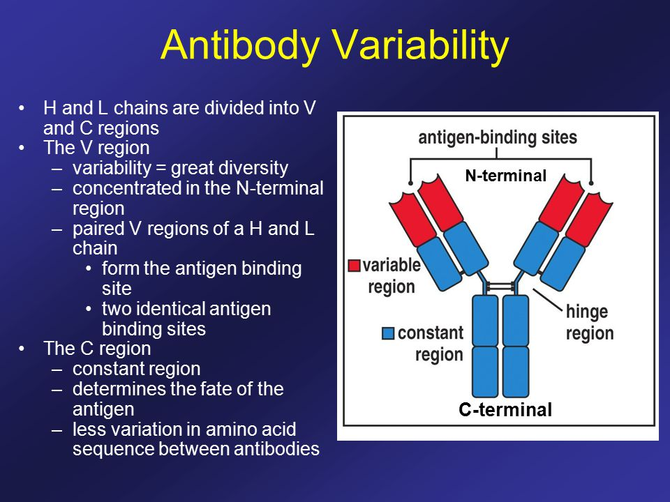 effect of parasite diversity and age on antibody responses Antigen-specific antibody responses and also markedly  the effect of various adjuvants on antibody  overall antibody diversity but also.