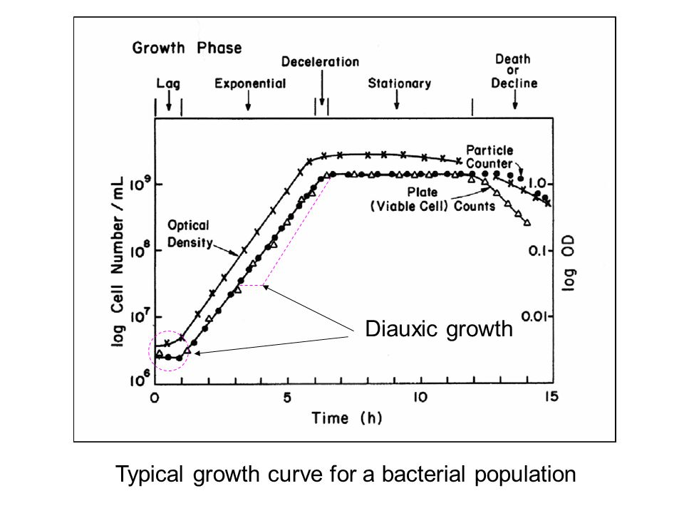 Diauxic growth Typical growth curve for a bacterial population