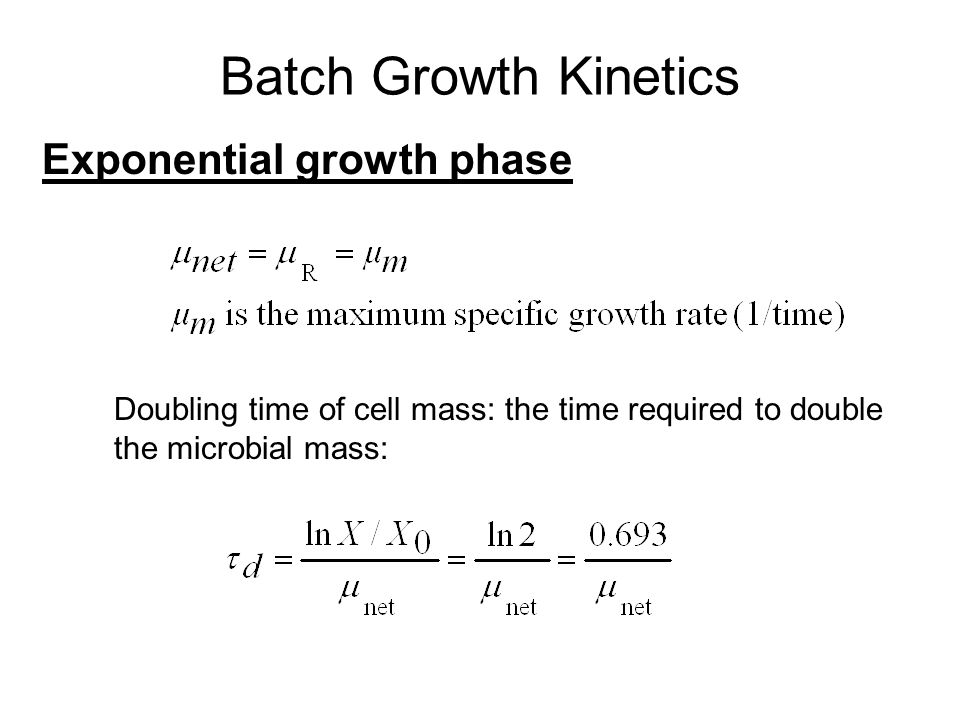 Batch Growth Kinetics Exponential growth phase