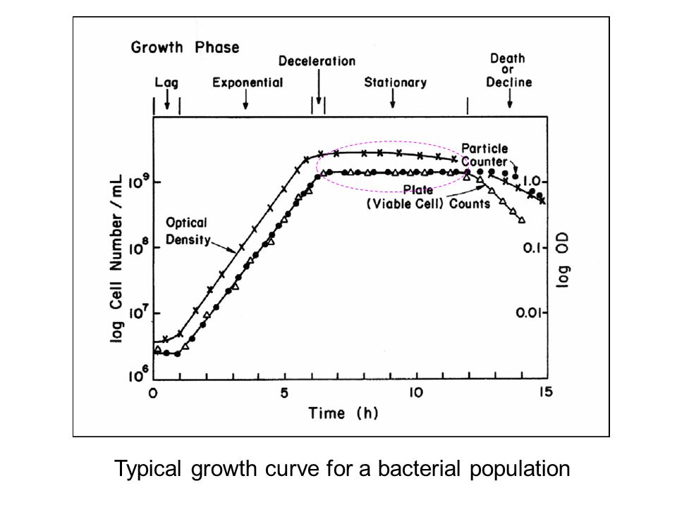 Typical growth curve for a bacterial population