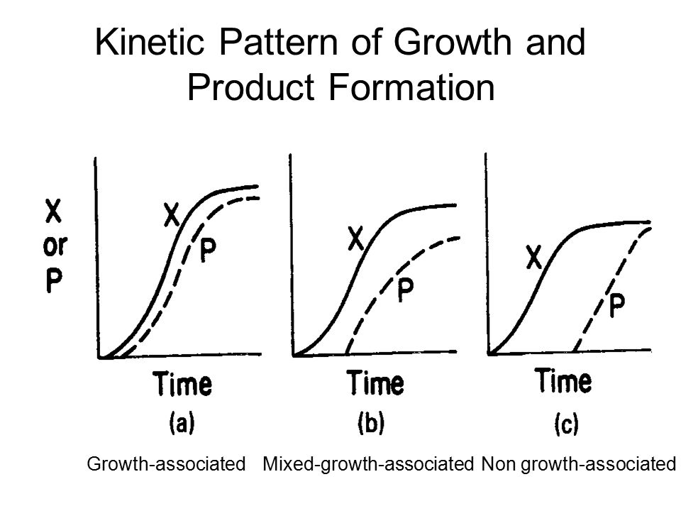Kinetic Pattern of Growth and Product Formation