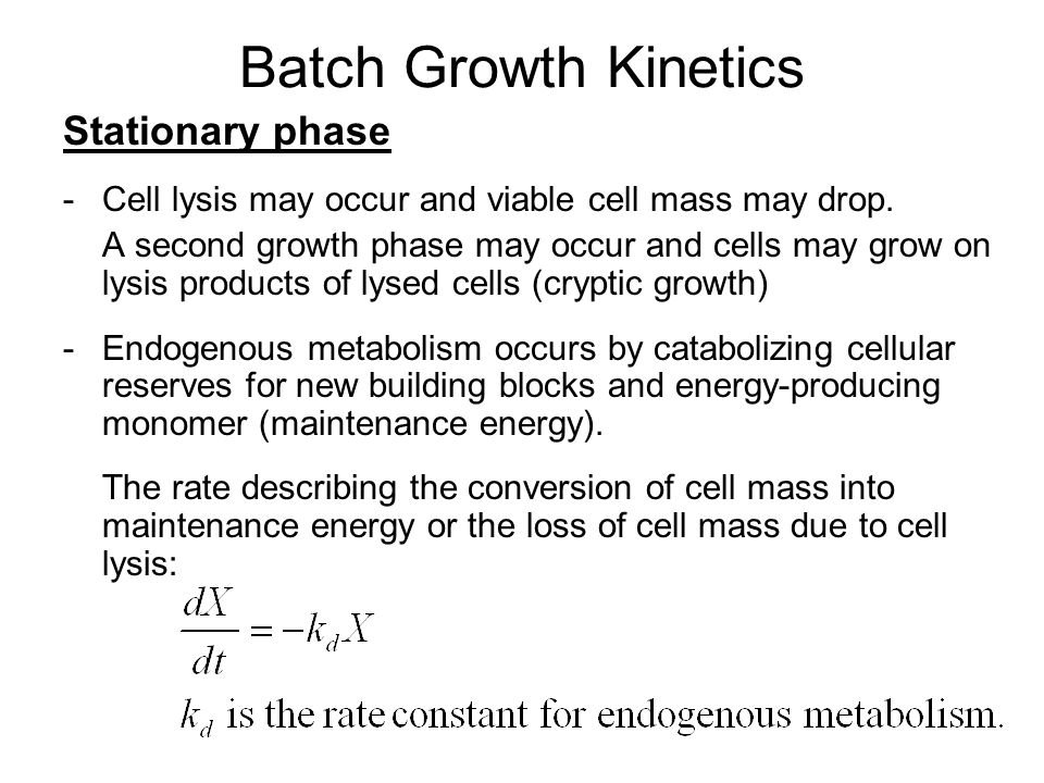 Batch Growth Kinetics Stationary phase