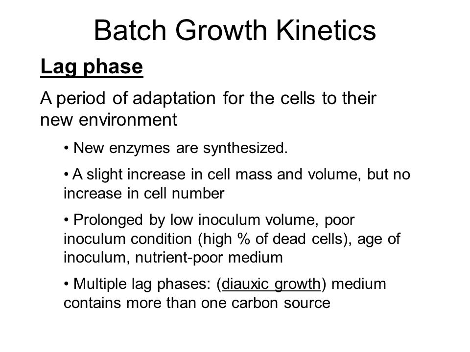 Batch Growth Kinetics Lag phase