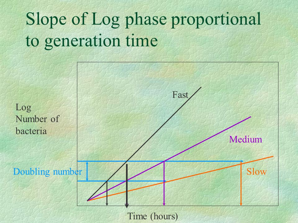Slope of Log phase proportional to generation time