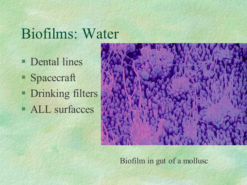 Biofilms: Water Dental lines Spacecraft Drinking filters ALL surfacces