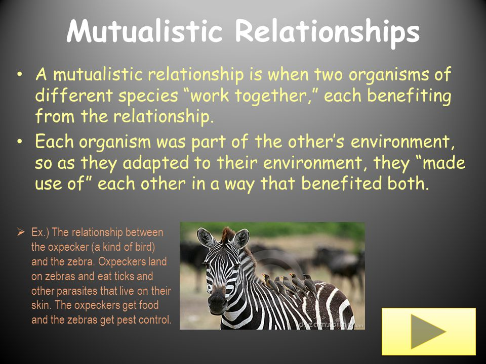Symbiotic relationships ppt video online download.