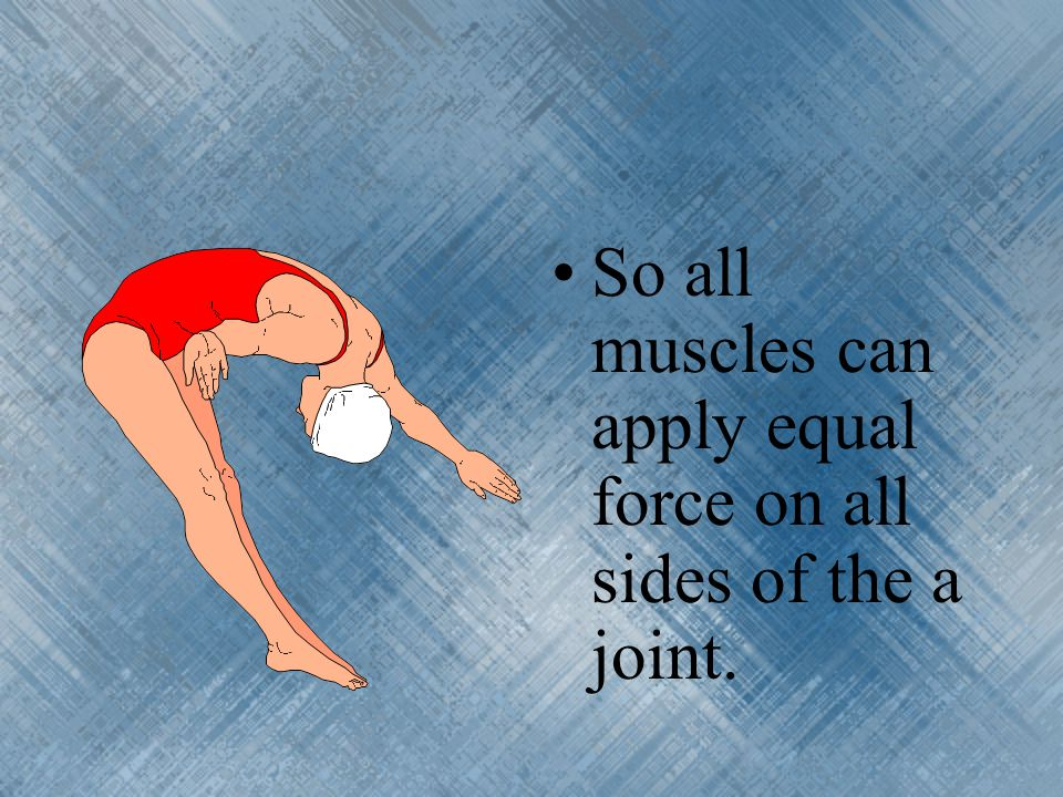 So all muscles can apply equal force on all sides of the a joint.