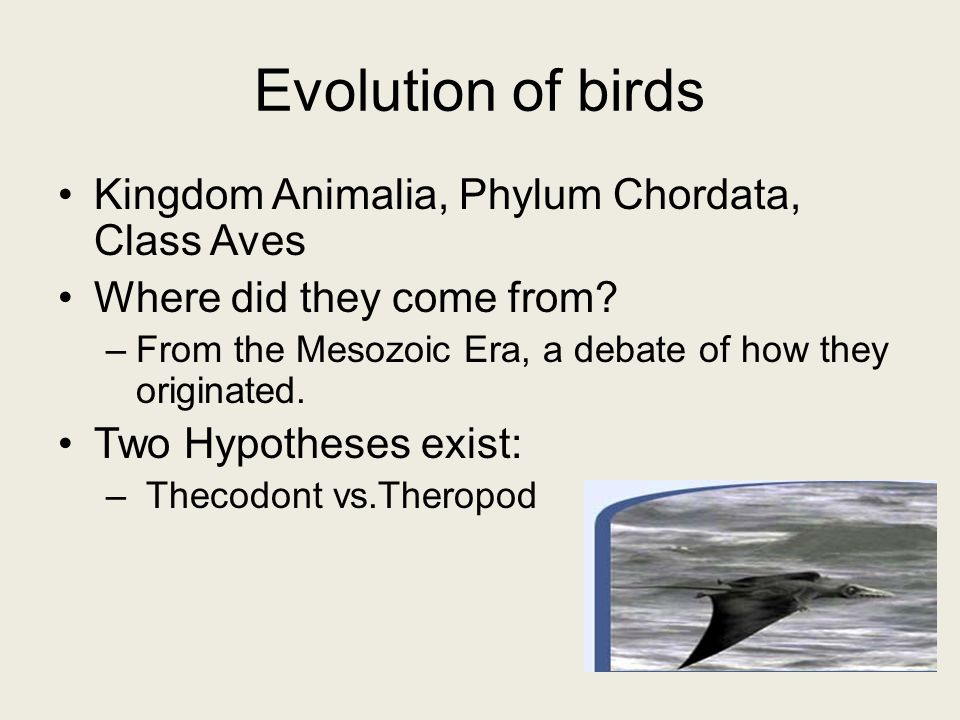 Evolution of birds from reptiles ppt video online download.