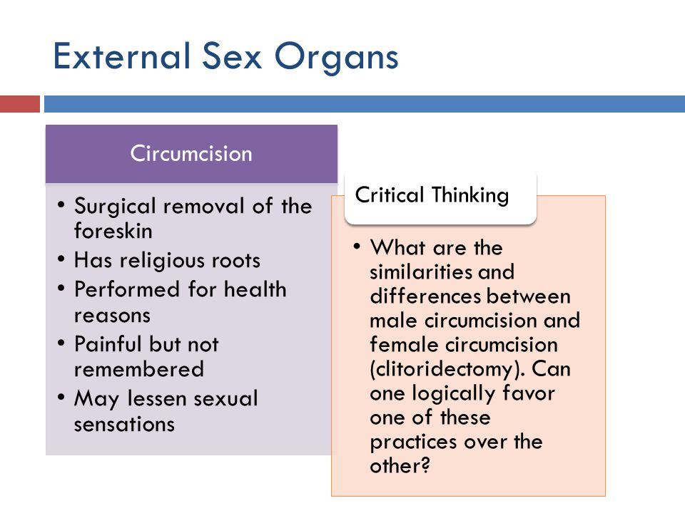 Male Sexual Anatomy And Physiology Ppt Video Online Download