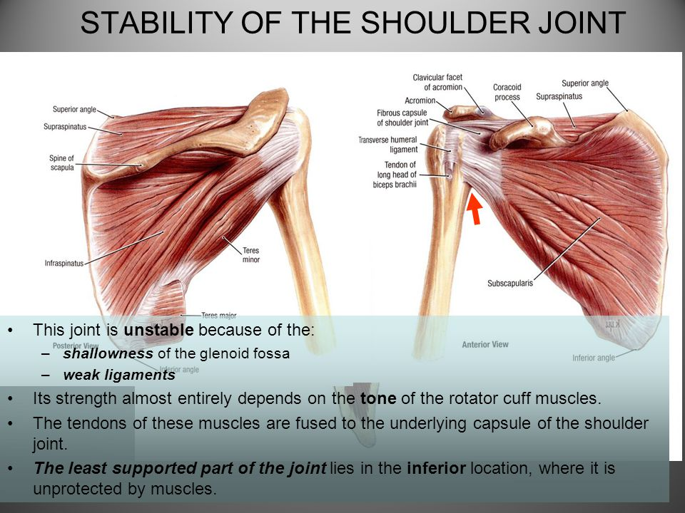 FUNCTIONAL ANATOMY OF SHOULDER JOINT - ppt video online download