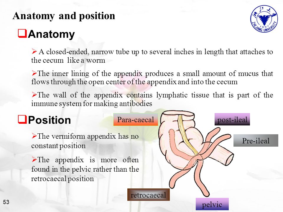 Acute Abdomen and Appendix - ppt video online download