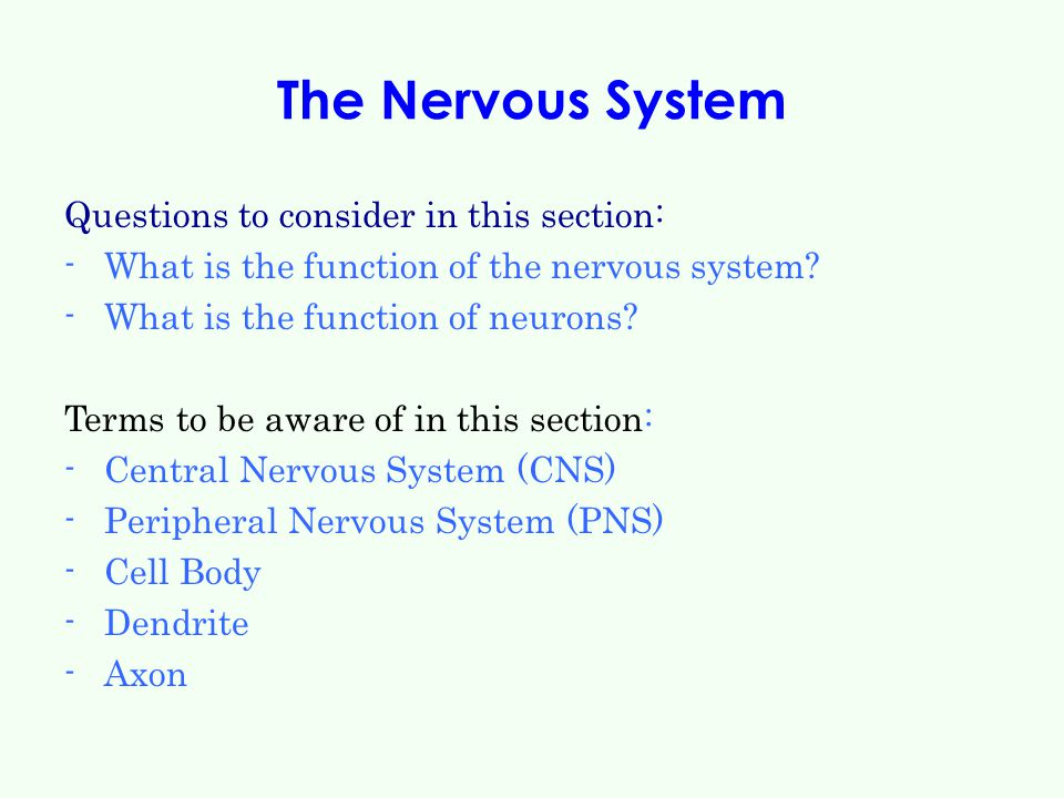The Nervous System Questions to consider in this section: