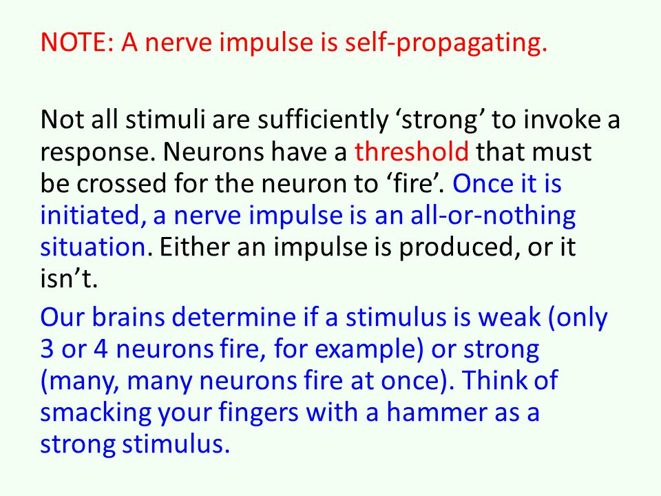 NOTE: A nerve impulse is self-propagating