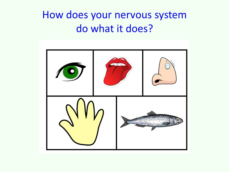 How does your nervous system do what it does