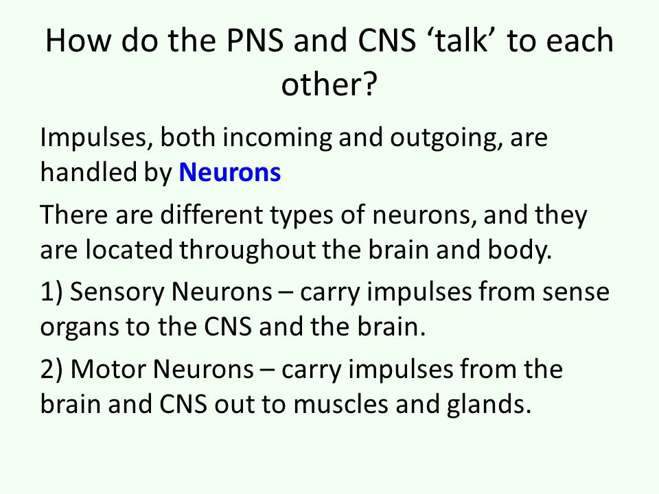 How do the PNS and CNS 'talk' to each other