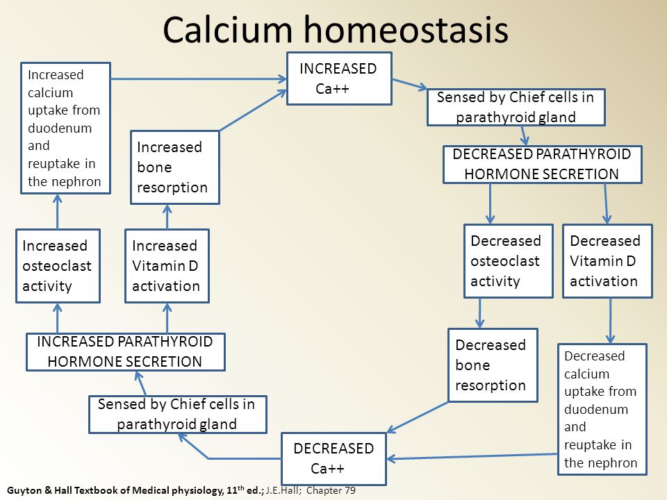 Calcium Metabolism And Hypercalcemia Ppt Video Online Download. 18 Calcium Homeostasis. Wiring. Bones In Calcium Homeostasis Diagram At Scoala.co
