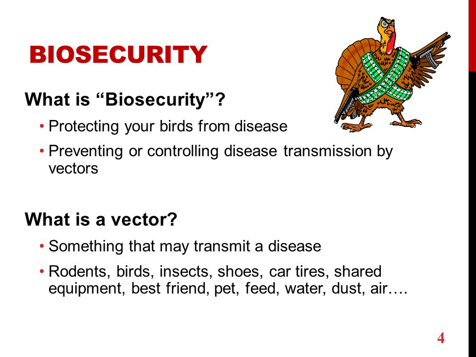 Biosecurity for poultry - ppt download