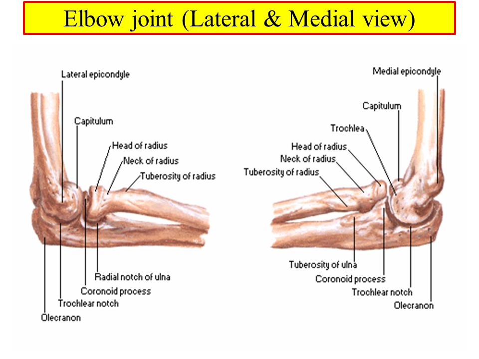 Muscles Of Arm Cubital Fossa And Elbow Joint Dr Sama Ul Haque