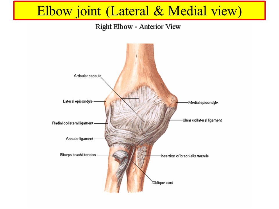 Muscles of Arm, Cubital fossa, and Elbow joint Dr. Sama ul Haque ...