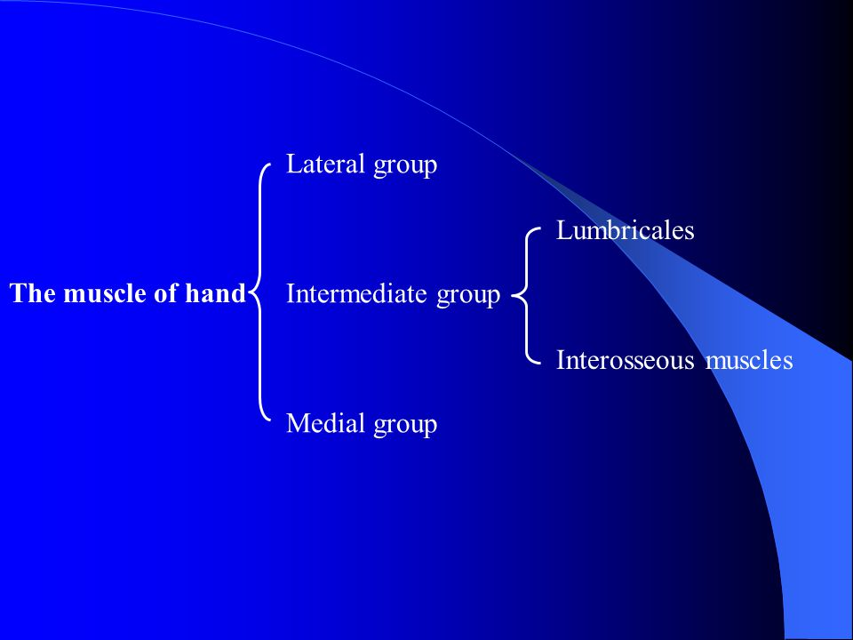 Lateral group Intermediate group Medial group Lumbricales Interosseous muscles The muscle of hand