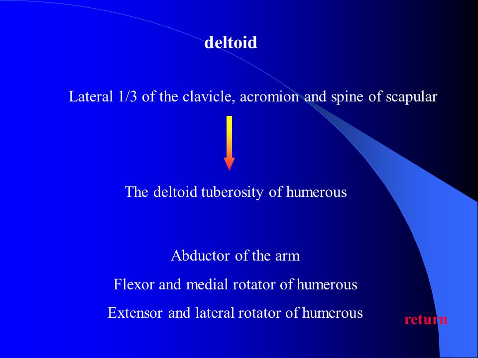 deltoid Lateral 1/3 of the clavicle, acromion and spine of scapular
