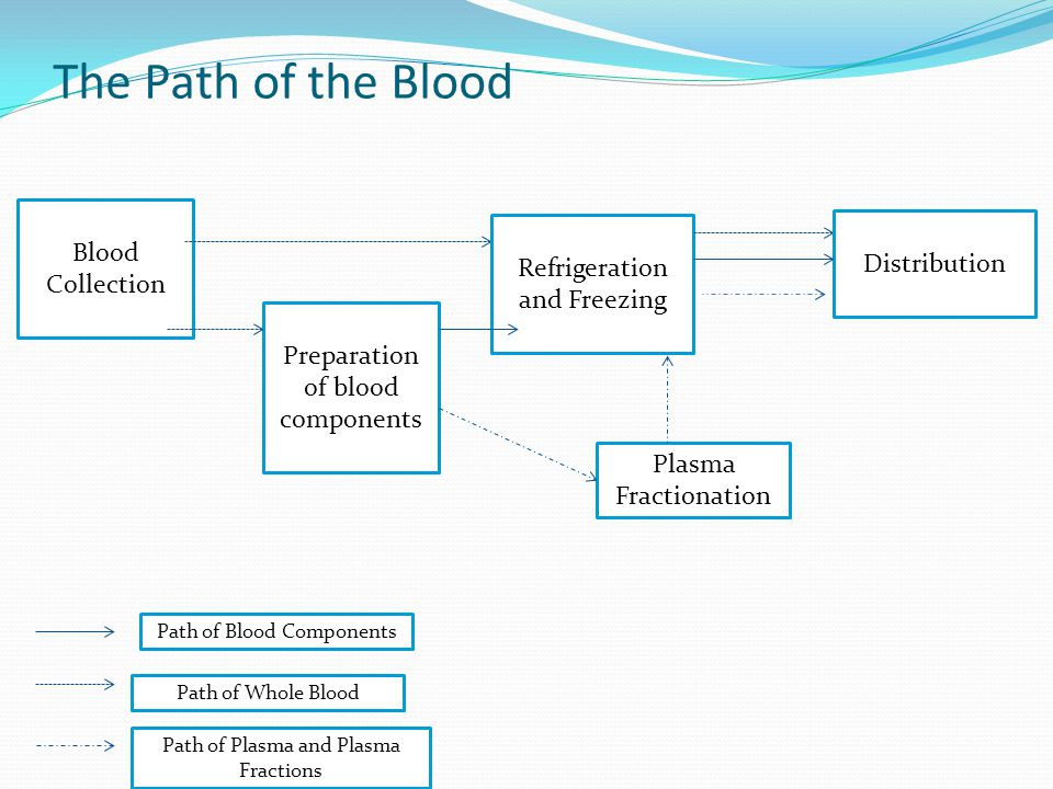 The Path of the Blood Blood Collection Distribution