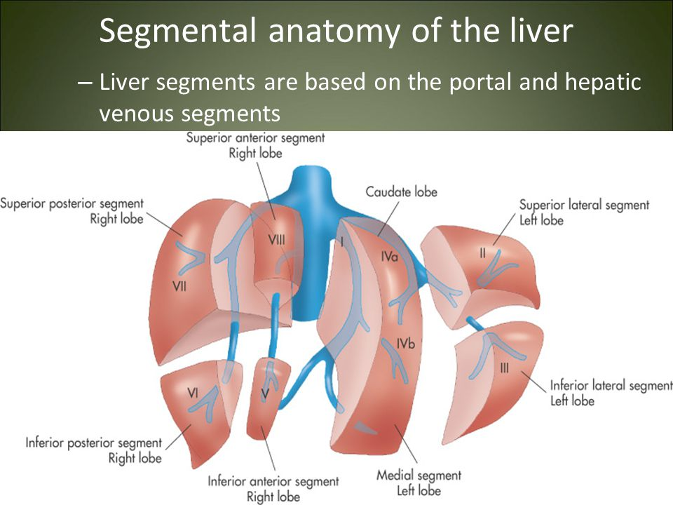 Liver Gallbladder Spleen Ppt Video Online Download