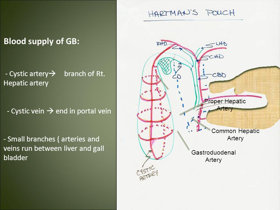Liver Gallbladder Spleen Ppt Video Online Download
