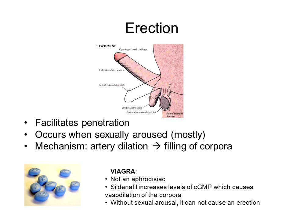 illustration-geschlechtsverkehr-erregung-erektion-penetration-lesbische-gefesselte-aktfotos