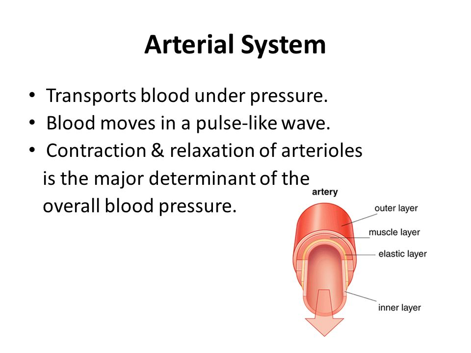 Arterial System Transports blood under pressure.